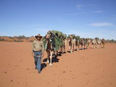 Outback Australian Camels Camel Safaris 5-7 trekking safaris in Outback Aus