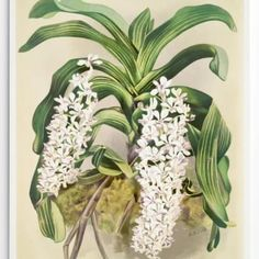 Vintage prints are so on trend! Add these orchid prints to your interior blending modern and old to perfection. Order from: nancydesigns.co.za #decor #vintage #vintagedecor #homedecor #homedecoration #home #interiordecor #interior #wallart #vintageart #orchid #onlinedecorshop Vintage Prints, Vintage Decor, Vintage Art, Space Matters, Park Homes, Apartment Interior, Office Interiors, Design Projects, Orchids