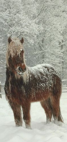 I had a chestnut horse with a flaxen mane and lived in a winter wonderland once upon a time. This is exactly what she looked like in the snow.