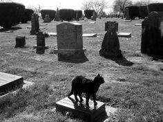 BLACK CAT/CEMETERY