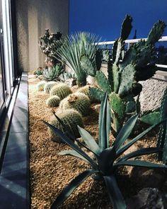 Dry Garden, Indoor Garden, Garden Plants, Fresco, Outdoor Greenhouse, House Landscape, Garden Styles, Garden Planning, Backyard Landscaping
