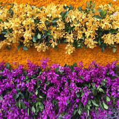 Perfect color combination- yellow and purple orchids for flower arrangements