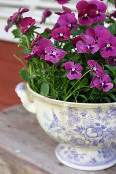 Violas in blue and white transfer ware bowl
