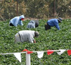 Farms often employ many temporary workers.    農場はしばしば多くの季節労働者を使う。