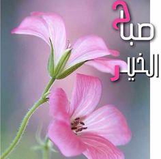 Desert Rose,;,good morning,;,