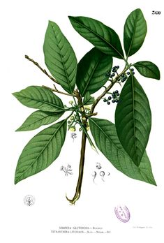 Laurel is used in bouquets for success in love Planting Seeds, Planting Flowers, Herbal Image, Litsea Cubeba, Leaf Crown, Flower Meanings, Victorian Flowers, Language Of Flowers, Trees And Shrubs