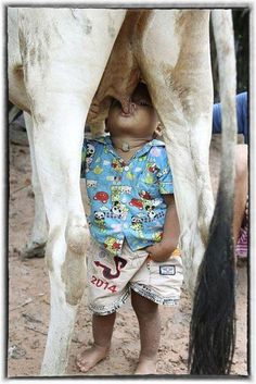 Doğal Süte Teşvik Kampanyası - Özgür Usta