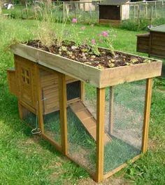 Green Roof For The Chicken Coop/Rabbit Hutch