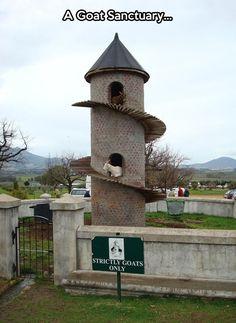 A castle for goats...
