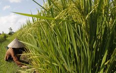 How agriculture can improve health and nutrition