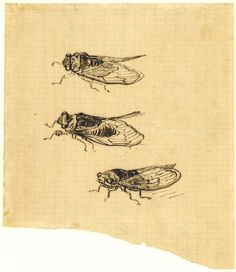 Vincent van Gogh Three Cicadas 1889