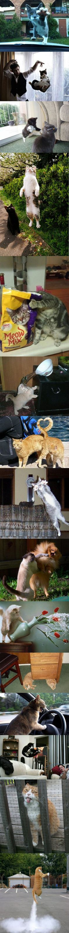 Here are some perfectly timed cat pictures snapped at the right moment.