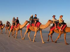 7. Ride a Camel in the desert