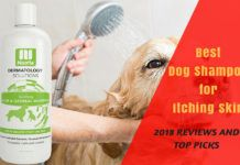 Best Dog Shampoo for Itching Skin Best Dog Shampoo, Oatmeal Shampoo, Dog Grooming Tips, Best Brushes, Best Shampoos, Lhasa Apso, Dog Coats, Best Dogs, Top