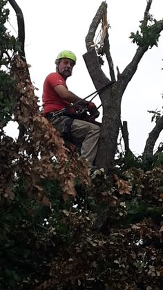 Francesco at work cutting some branches broken by the wind storm