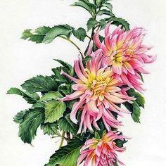 다알리아(식물화가협회 공모전 작품)# Watercolor pencil# botanicalart#꽃그림#보타니컬아트