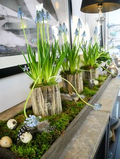 Love this flower arrangement with contained grape hyacinth with the scattered moss. Beautiful mantel piece without the eggs