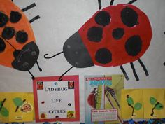 PATTIES CLASSROOM: The Stages of a #Ladybug'sLifecycle