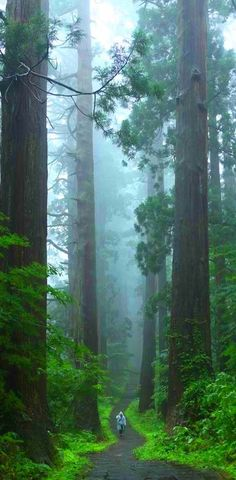 Sequoia National Park, California, United States