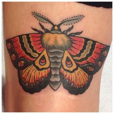 Moth by Matt Lentz