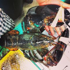 Lucky Catch Lobstering Cruises 170 Commercial St Portland, ME 04101