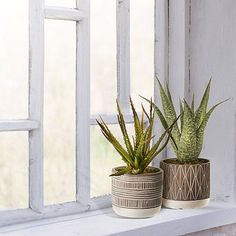 Decorate your window sill with our lively set of Aloe Plants in Ceramic Pots! These aloe plants will add a natural touch to your home or kitchen decor! Window Sill Decor, Kitchen Window Sill, Kitchen Plants, Kitchen Decor, Watercolor Wallpaper, Ceramic Pots, Pot Sets, Modern Decor, Aloe