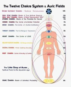 12 Chakra System Aside from the seven main chakras within your personal energetic body, there are also five other portals that serve also as anchor points and energetic vortices that connect you with. Chakra System, Sacral Chakra, Chakra Healing, Throat Chakra, Ayurveda, Les Chakras, Body Chakras, Mudras, Reiki Energy