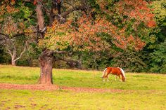 Check out Horse / nature / Gras by ChristianThür Photography on Creative Market Gras, Beautiful Horses, Creative, Nature, Check, Plants, Photography, Animales, Pretty Horses