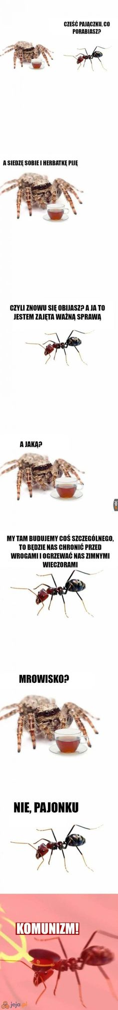 Mróweczki muszą sobie jakoś radzić Very Funny Memes, Wtf Funny, Funny Mems, Nyan Cat, Smile Everyday, Meme Comics, Pokemon, Me Me Me Anime, Best Memes