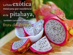 La fruta exótica mexicana por excelencia es la pitahaya, también conocida como fruta del dragón. SAGARPA SAGARPAMX #SomosProductores