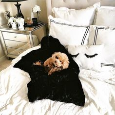 "1,946 Likes, 16 Comments - @dormify on Instagram: ""Cute puppy + cute pillows = #roomgoals 