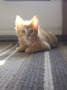 My cat, Leo, when he was a kitten. ^.^ cute cats