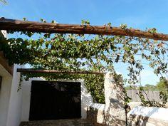Pergola van oude balken met Vitis vinifera begroeid