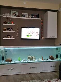 244 best fish and aquariums images in 2019 fish tanks aquariums rh pinterest com