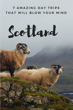 Scotland is the perfect place for nature lovers and history buffs. In this guide, we have listed 7 absolutely breathtaking day trips from Glasgow that will completely blow your mind! #VisitScotland #Glasgow #Edinburgh #FringeFestival #ScottishHighlands #ScottishRoadtrip #DaytripScotland #HighlandCoo #Glencoe