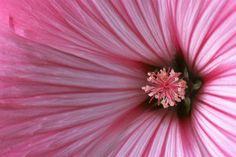Lezingen - Natuur in al haar schoonheid - Marcel Batist