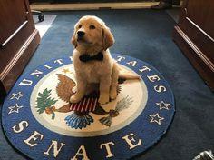 Joe Biden Met A Golden Retriever Pup Named 'Biden' And It Was Love At First Sight