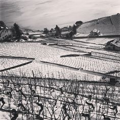 Le vignoble du Lavaux © PascalouPhotos #ig_switzerland #lavaux #bestphotogram_bnw #bw_nat Louvre, Black And White, Building, Places, Travel, Vineyard, Snow, Viajes, Black White