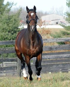Bullet Train (Ire) B c 2007, Sadler's Wells (USA) - Kind (Ire) at stud in the US. Three-quarter brother to Frankel (GB).