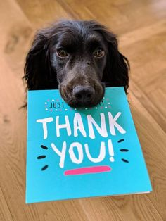 36 54 solna dog biting Thank You mail paper Tilly saying thank you Thank You Mail, Thank You Pictures, Power Yoga, Food Dog, Gifts For Veterinarians, Dentist In, Employee Appreciation, Boxer Dogs, Training Your Dog