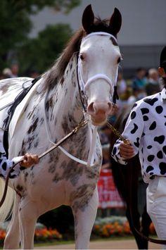 """MISS VISTA v BUCHIKO international match race series gotta happen. Pretty Horses, Horse Love, Beautiful Horses, Horse Sketch, Thoroughbred Horse, Racehorse, White Horses, Equine Art, Horse Photography"