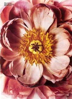 periwinkleliving:  (via Ready Set Fashion: Irving Penn  Flowers)