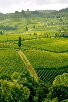 Chianti - Top 10 Travel Destinations in Southern Tuscany