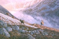 red deer stag picture - original oil painting of a red deer stag