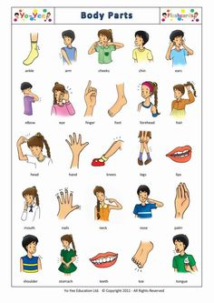body part images for kids | Body Parts flashcards for kids | Body Parts…