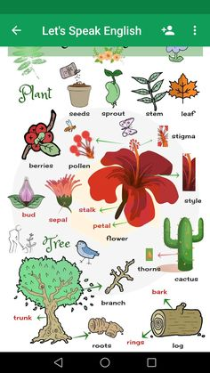 Plant and Flower Vocabulary in English – ESLBuzz Learning English Plant and Flower Vocabulary in English – ESL Buzz Learning English For Kids, English Lessons For Kids, Kids English, English Language Learning, English Study, Teaching English, English English, French Lessons, German Language