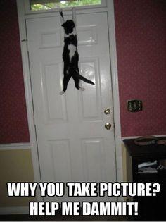 Cats, cat, door, hang, help, picture