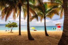 Tropical beach in Jamaica with tall palm tree on Caribbean sea, Montego bay. Fashion travel and tropical beach concept. Rum Shop, Asian Games, Paradise On Earth, Island Nations, Montego Bay, I Want To Travel, Virgin Islands, Beautiful Beaches, Palm Trees