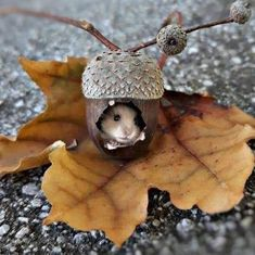 This too cute to be real - Animals wild, Animals cutest, Animals funny, Animals drawings Cute Creatures, Beautiful Creatures, Animals Beautiful, Cute Little Animals, Cute Funny Animals, Nature Animals, Animals And Pets, Autumn Animals, Photo Animaliere
