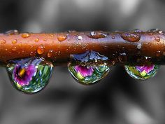 Image Detail For Drops Black And White Background Color Splash Picture By